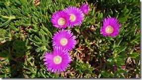 1700 Blume am kaspischen Meer (1024x575)