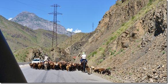 2069 Schafherden auf dem Tien-Schan Highway (1024x506)