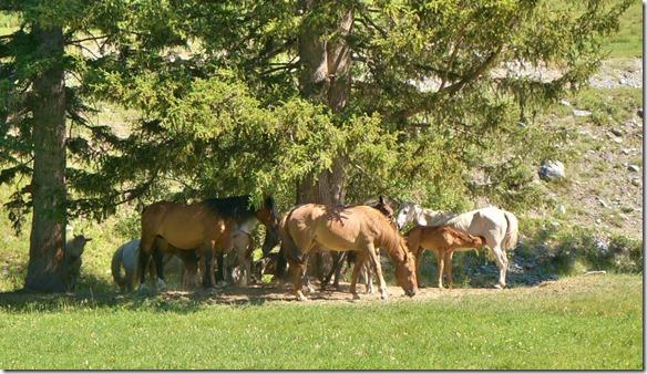 3177 Eine Pferdeherde besucht das Camp  (1024x587)