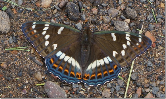 3199 Franz auf Schmetterlingsjagd  (1024x608)