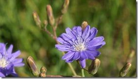 3414 Blumen in verschiedenen Farben  (1024x575)
