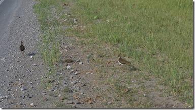 3425 Bemerkenswert die Häubchen dieser uns unbekannten Vogelart  (1024x575)