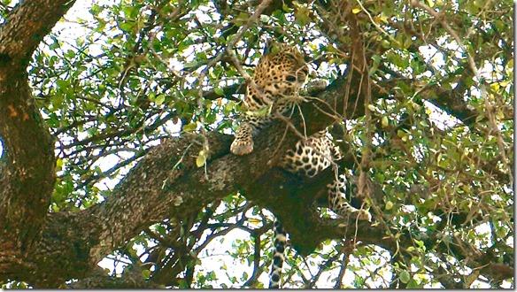 2120 er fühlt sich wohl und sicher da oben im Baum