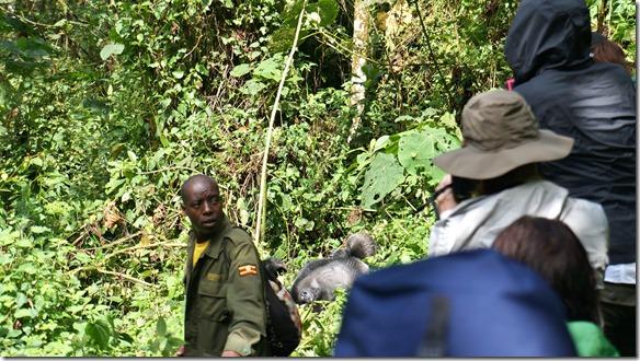 2233 jetzt stösst ein Tracker, der die Gorillas aufgespürt hat zu uns