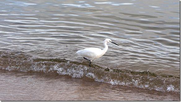 2280 Wasservogel 2