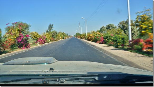 2995 die blumengesäumte Strasse nach Hurgada, natürlich vor der Abzweigung durch die Wüste