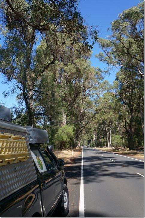 1079 der Forrest dehnt sich über 20 km2 aus