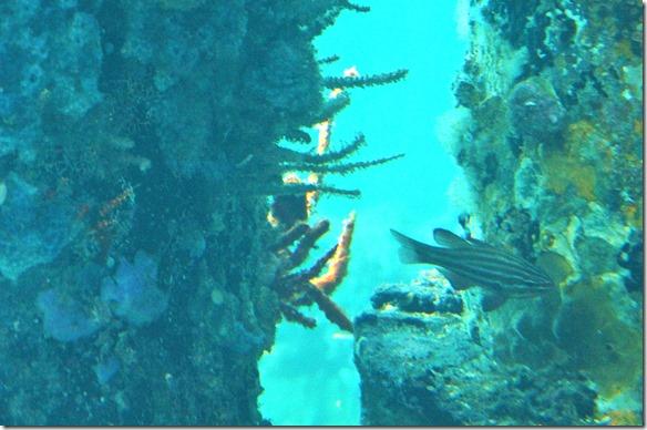 1094 die Fische leben von den Pflanzen die an den Jettypfosten wachsen