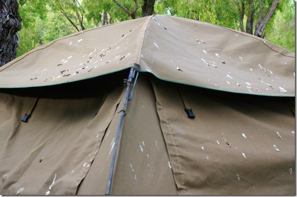 1120 nach der ersten Nacht auf dem Mandalay Camping hatten die Parrots unser Zelt mit ihrer Scheisse verwechselt