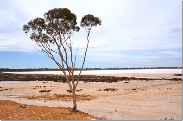 1253 wo der Salzsee das Ufer hat da wächst nichts mehr