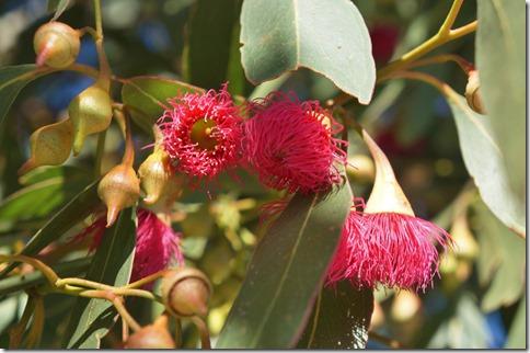 1397 wenn die farbigen Blütenblätter weg sind bleibt eine Frucht die aussieht wie unsere Eichel