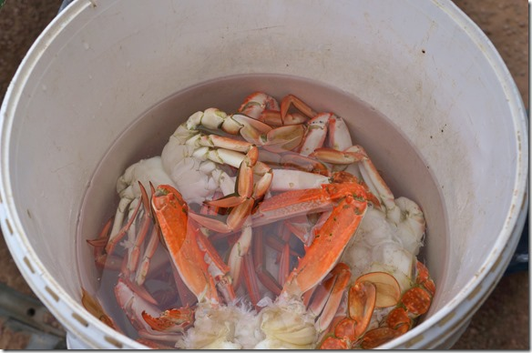 1441 der ganze Krabbenfang nach dem heissen Bad