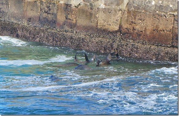 1822 wenn sie nicht in den Wellen spielen, dann planschen sie Faul im Wasser rum