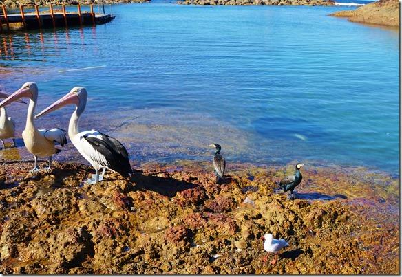 1860 auch alle Vögel warten ob sie was zu fressen kriegen