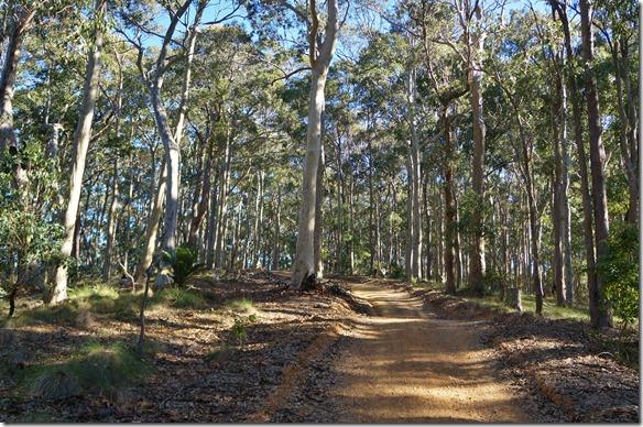 1869 der Waldweg durch den Mimosa NP