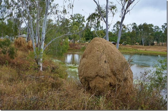 2684 hier sind die Termitenhügel anders als die Spitzen in Afrika