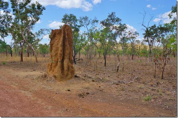2794 die Termitenhügel hier sind RIESIG = an dem ist schon ein Teil weggebrochen