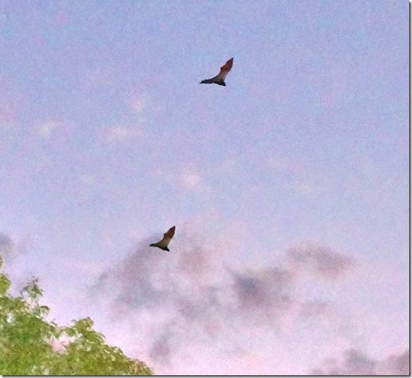 2856 wenn man die Foto durchs Zoom betrachtet, sieht man, dass sie keine Schwänze zum Steuern des Fluges haben
