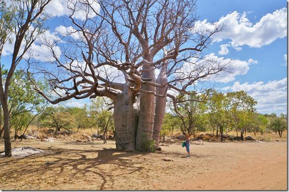 3154 Gaby bewundert diese riesigen Bäume