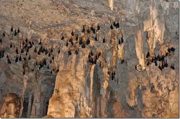 3182 diese Fledermäuse geniessen die Kühle im Tunnel