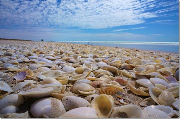 3347 an der 80 Mile Beach unserem nächsten Stopp werden Millionen von Muscheln angeschwemmt