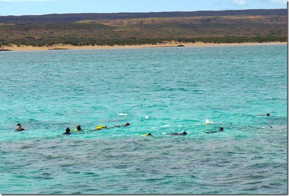 3371 jetzt geht es los mit tachen im Reef