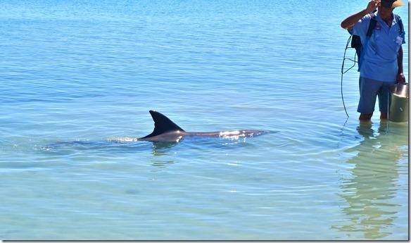 3446 hier hat der Delfin einen kleinen Fisch bekommen und somit ist für diesen Schluss für heute