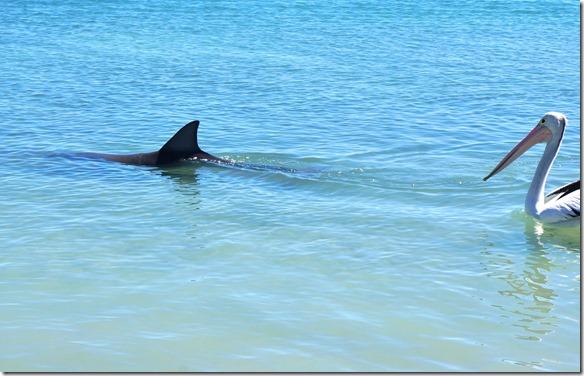 3448 auch der schwimmt nun weg