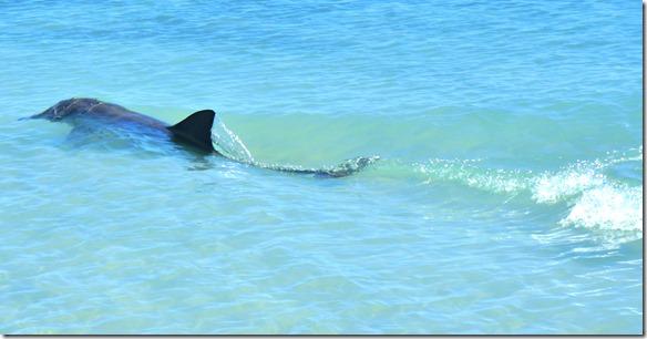 3456 es ist schon erstaunlich wie schnell diese Meerestiere schwimmen können