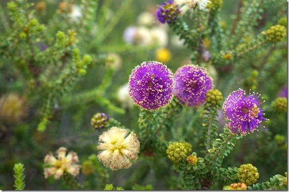 3496 diese Blumen sehen aus wie eine schöne Festrakete