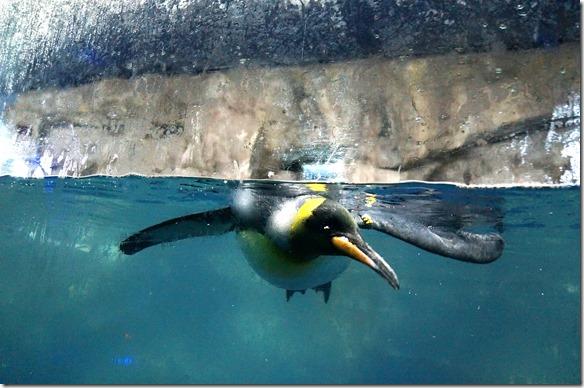 1030 dieses Wasser ist auf Antarktische Verhältnisse gekühlt