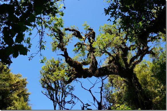 1071 Bäume wie sie in den Filmen zu Herrn der Ringe dargestellt wurden