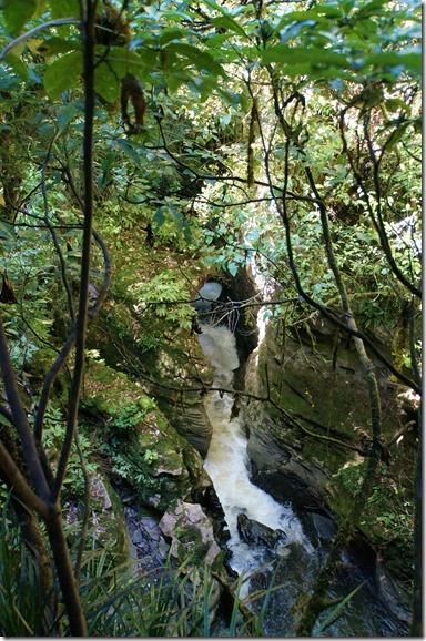 1072 viel kleine und grössere Bäche durchziehen diesen schönen Naturwald