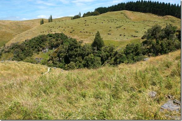 1086 hier sieht man einen Graben der durch Erdbeben und Erdverschiebungen entstanden ist und der sich immernoch bewegt
