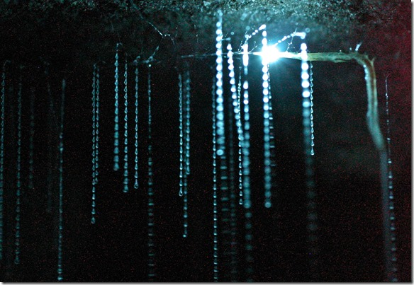 1090 F HIGH RES Spellbound glowworm threads2
