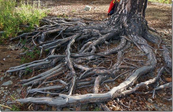 1210 selbst die gewöhnlichen Baumwurzeln sehen wie Gewächse aus einer verwunschenen Geschichte aus