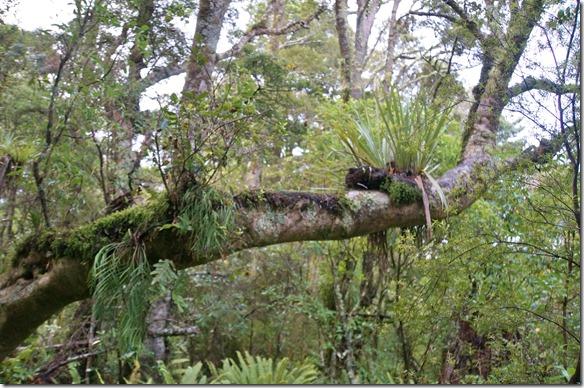 2149 auf der abentlichen Wanderung durch den Regenwald sieht man viele für uns unbekannte Planzen die irgendwie kmisch wo wachsen