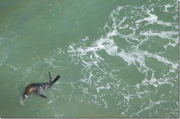 2203 im Wasser bewegen sie sich elegant und geschmeidig, an Land sind die Bewegungen eher Harzig und plump