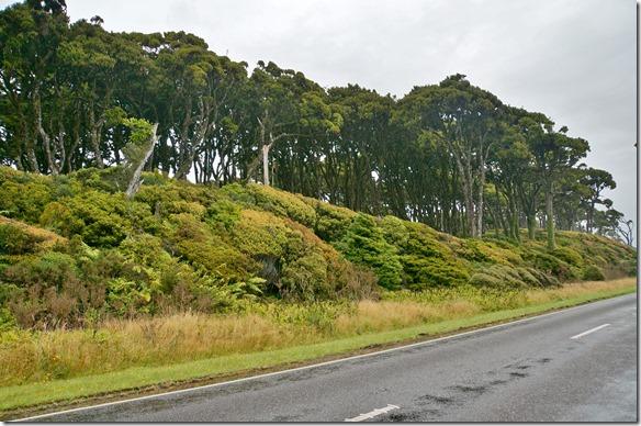 2459 hier sieht man die schönen Farben die der Unterwald in diesem Regenwaldgebiet hat