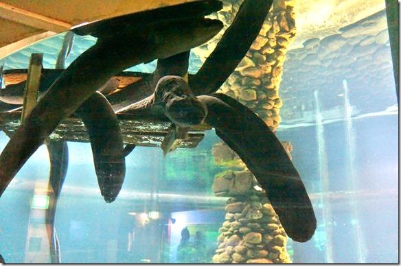 2484 hier gibt es Aale die bis 2.2 Meter lang und bis 130 Jahre alt sind. Es sind nur weibliche Tier die so alt werden. Sie werden auch fast ganz Blind