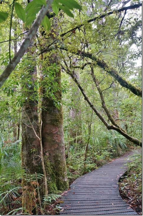2557 die Wurzeln dieser Bäume sind sehr anfällig aufs drauftretten und beschädigen