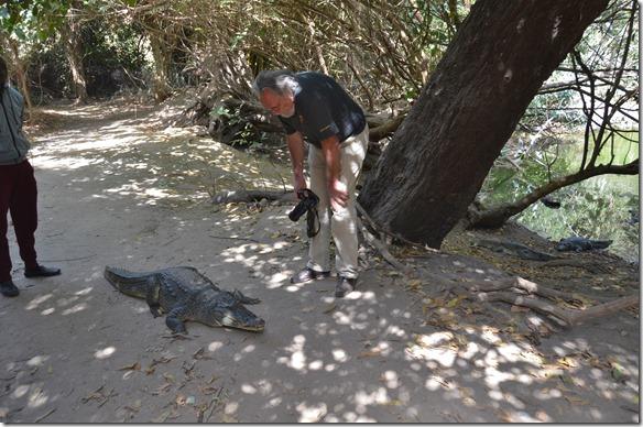 a1288 Ulli der Deutsche kann trotz Warnungen der Wächter nicht nahe genug an das Krokodil ran = unter Anleitung dürfen die Touristen gewisse Krokodile berühren