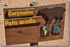 a1847-der-Carpincho-ist-ein-Meerschw[1]