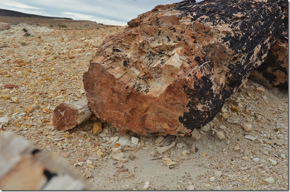 a1985 an den Stämmen kann man sogar noch die Jahrringe sehen, aber es ist Stein und somit hart und schwer