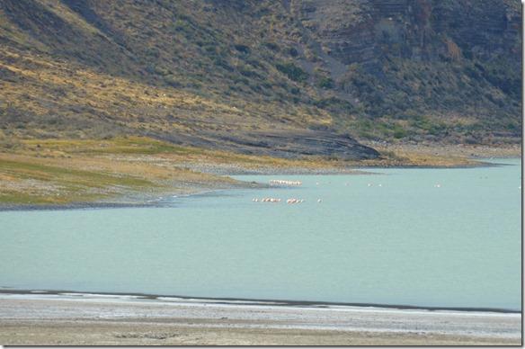 a2097 auf der Rückfahrt sehen wir noch eine Gruppe Flamingos, leider nur sehr weit weg