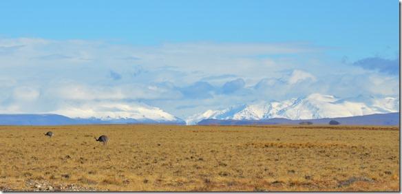 a2192 zwei einsam grsende Nandus mit Schneebergen im Hintergrund