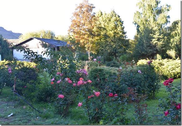 a2251 hier im Camping und auch im ganzen Dorf sind wunderschöne Rosen als Garten und Rabaten zu finden
