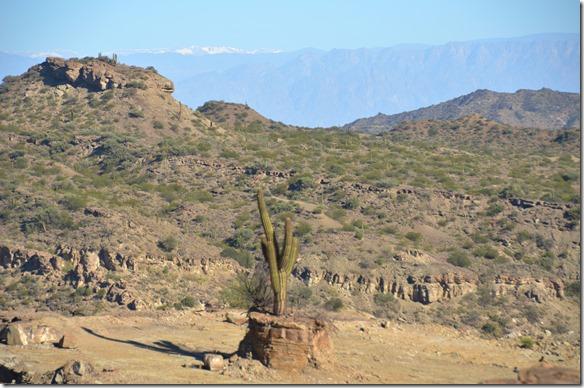 a2350 Schneeberge und Kaktuse