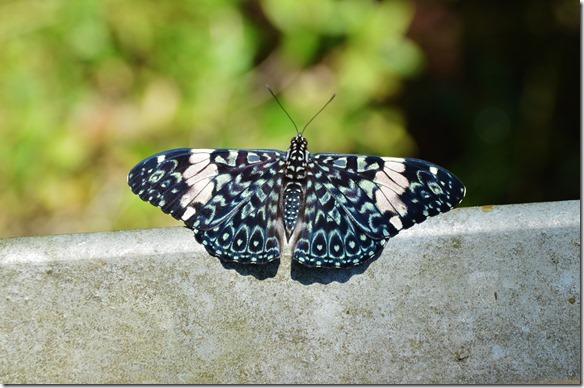 a2530 hier eine kleine Auswahl der im tropischen Wald zu findenden Schmetterlinge