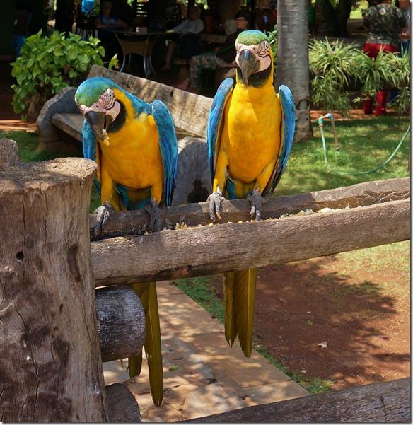 b2000 hier gibt es unzählige farbenprächtige, grosse und kleine Vögel